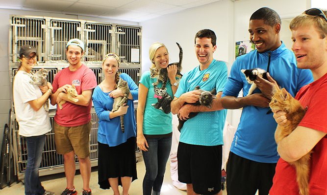 students volunteering for PILC service day at cat shelter