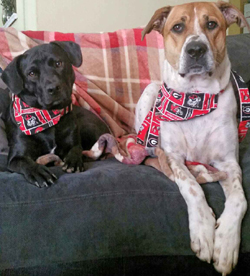 Law Dawgs Emma and Sadie Parks