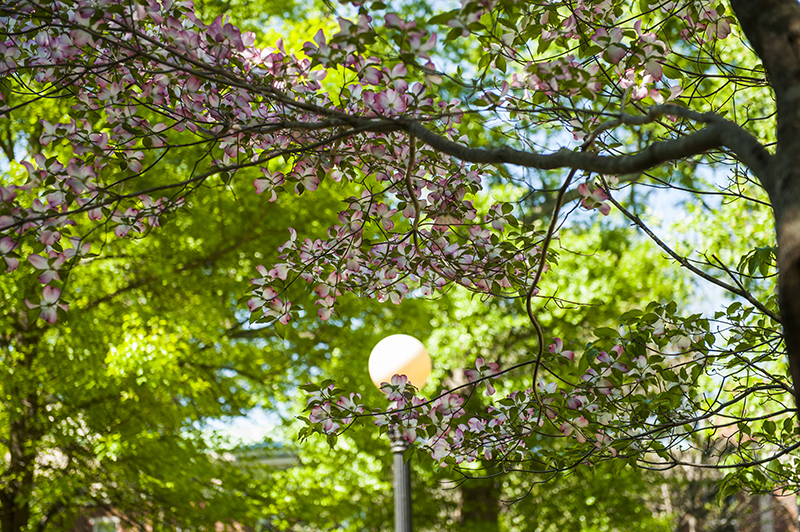 north campus uga flowers and lamp post